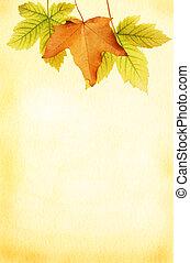 框架, 叶子, 羊皮纸