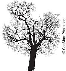 桑樹, 樹, 矢量