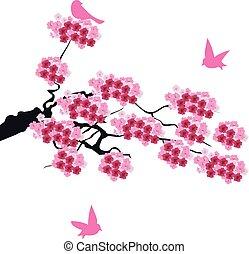 桜の木, ブランチ