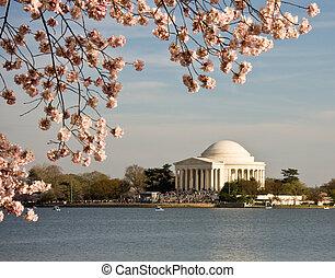 桜, そして, jefferson, 記念碑