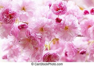 桜, 上に, 春, 桜の木