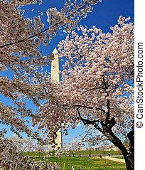 桜, 木。