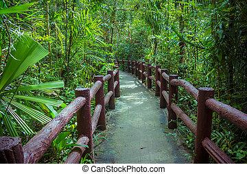 梢, rainforest, によって, 通り道