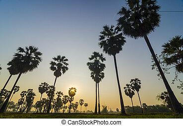 棕榈树, 在上, the, 背景, 在中, a, 美丽, 日出
