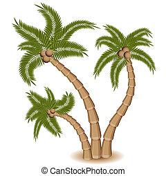 棕櫚樹, 三, 組