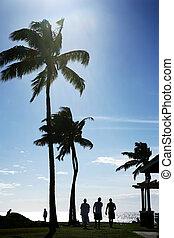 棕櫚樹, 在, the, 海洋, 在, 夏威夷