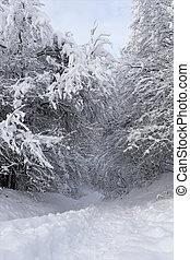 森林パス, 雪で覆われている, 冬, 朝