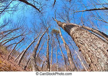 森林地帯, 冬