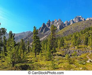森林地帯, 高山