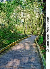 森林, によって, 道, 日当たりが良い, 歩くこと