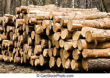 森林, パイルが積み重なった, 木材を伐採する, pine.