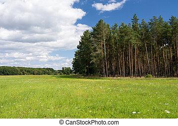森林, 中に, 夏