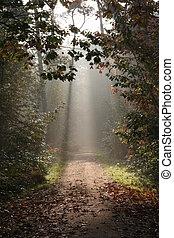 森林, 中に, 秋