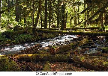 森林, 入り江