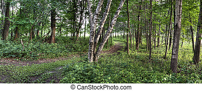 森林, 在中, hdr