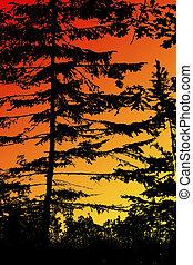 森林, 在, 日出