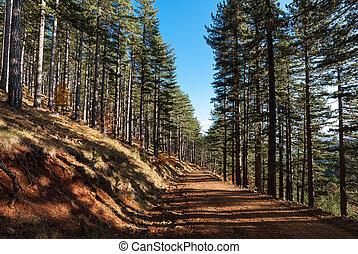 森林, 在, 秋天