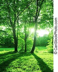 森林, 夏, 木