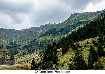 森林, 山, 空, 道, 暗い, 渡ること, の上, 自動車
