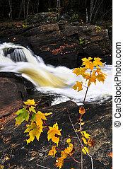 森林, 川, 中に, ∥, 秋