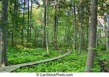森林, 形跡