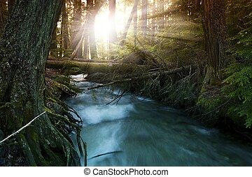 森林, 日光