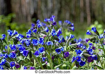 森林, 春, 色, 花, 明るい