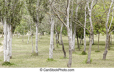 森林, 木