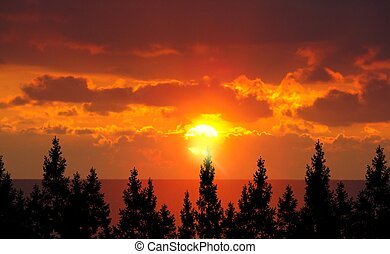 森林, 树, 同时,, 日出