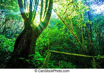 森林, 树, 绿色, sunlight., 大, 性质