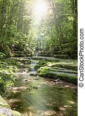 森林, 流れ