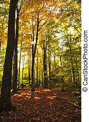森林, 秋