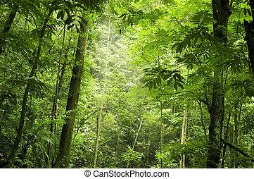 森林, 綠色
