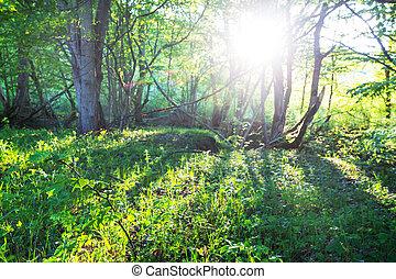 森林, 绿色