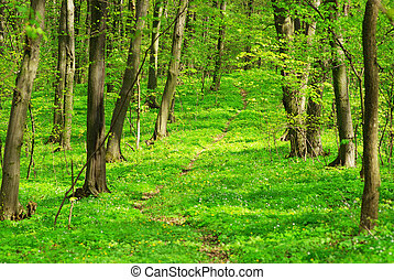 森林, 背景, 緑