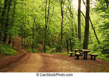 森林, 道
