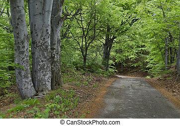 森林, 道, 絵のよう