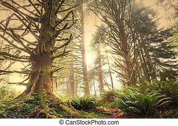 森林, 雨