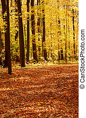 森林, 风景, 落下