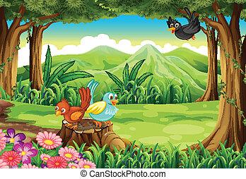 森林, 鳥