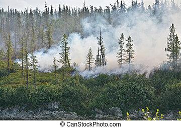 森林, fire.