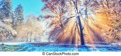 森林, sunrays, 冬, 朝
