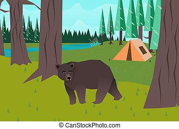 森, ベクトル, 熊