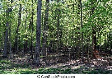 森, 落ちている, 嵐, 木