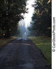 森, 長い道のり