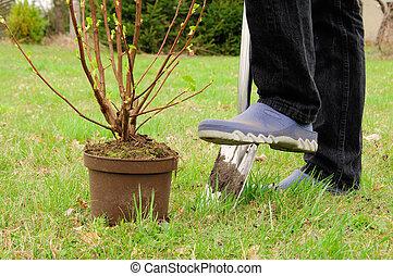 植えつけ, 低木