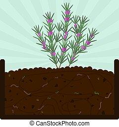 植えつけ, 堆肥, ローズマリー, 木
