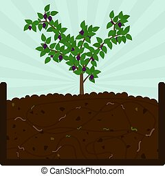 植えつけ, 堆肥, 果樹, ブラックベリー
