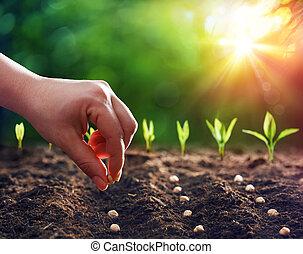 植えつけ, 手, 種, 土