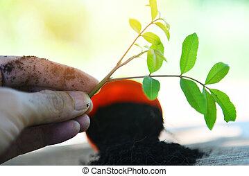 植えつけ, 植物, 園芸, 庭, -, 背中の手, 小さい, 庭, 仕事